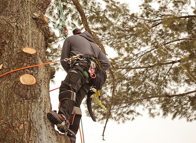 Five Star Tree Service employee trimming a tree